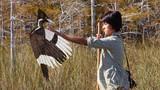 GHOST BIRD
