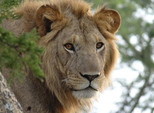 Play your part in conservation on a predator-tracking excursion