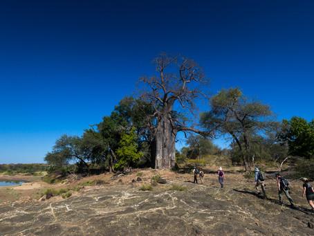 SOUTH AFRICA'S PREMIER WALKING SAFARIS