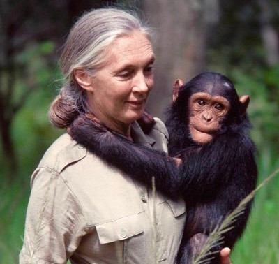 Jane Goodall earns top Sierra Leone award for her outstanding work