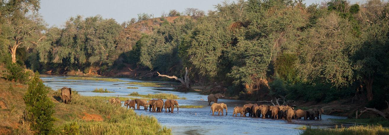 Pafuri Wildlife_MG_4963.jpg