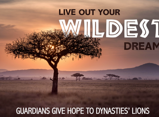 Guardians give hope to Dynasties' Lions