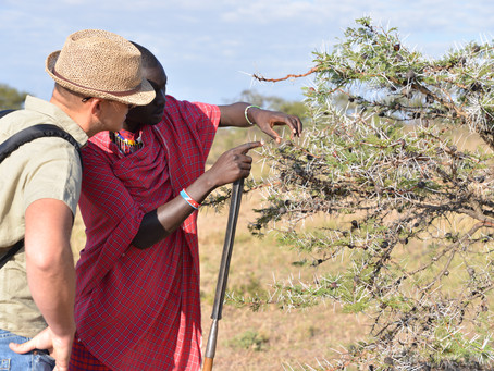 RESPONSIBLE TOURISM: WALKING SAFARIS IN THE MASAI MARA