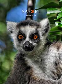 Safari 31