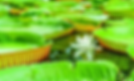 Screen Shot 2020-01-16 at 17.15.29.png