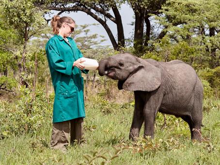 AN UNFORGETTABLE ELEPHANT ENCOUNTER