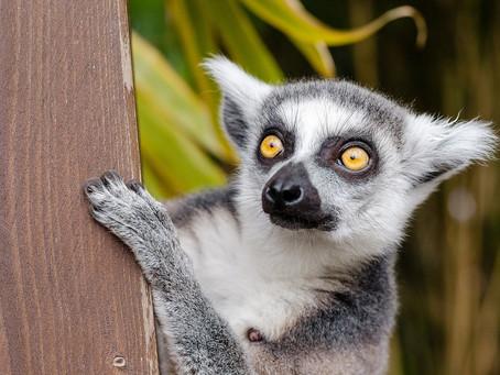 NEW DOMESTIC FLIGHTS FOR MADAGASCAR