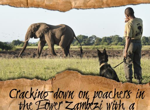K9 Unit cracks down on poaching in Zambia's Lower Zambezi