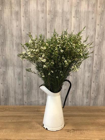 Flor de Cera Molho Pro