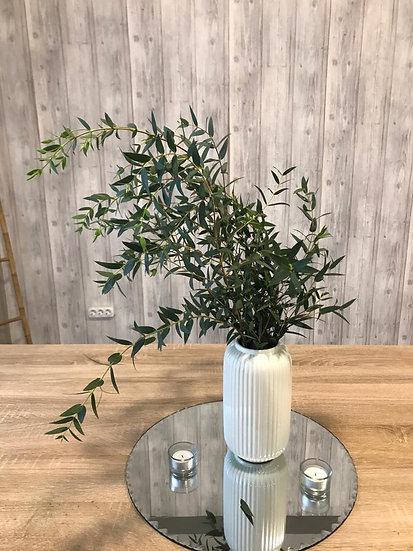 Eucalipto Parvifolia Pro