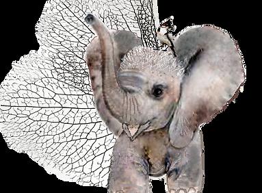 elephant final.png
