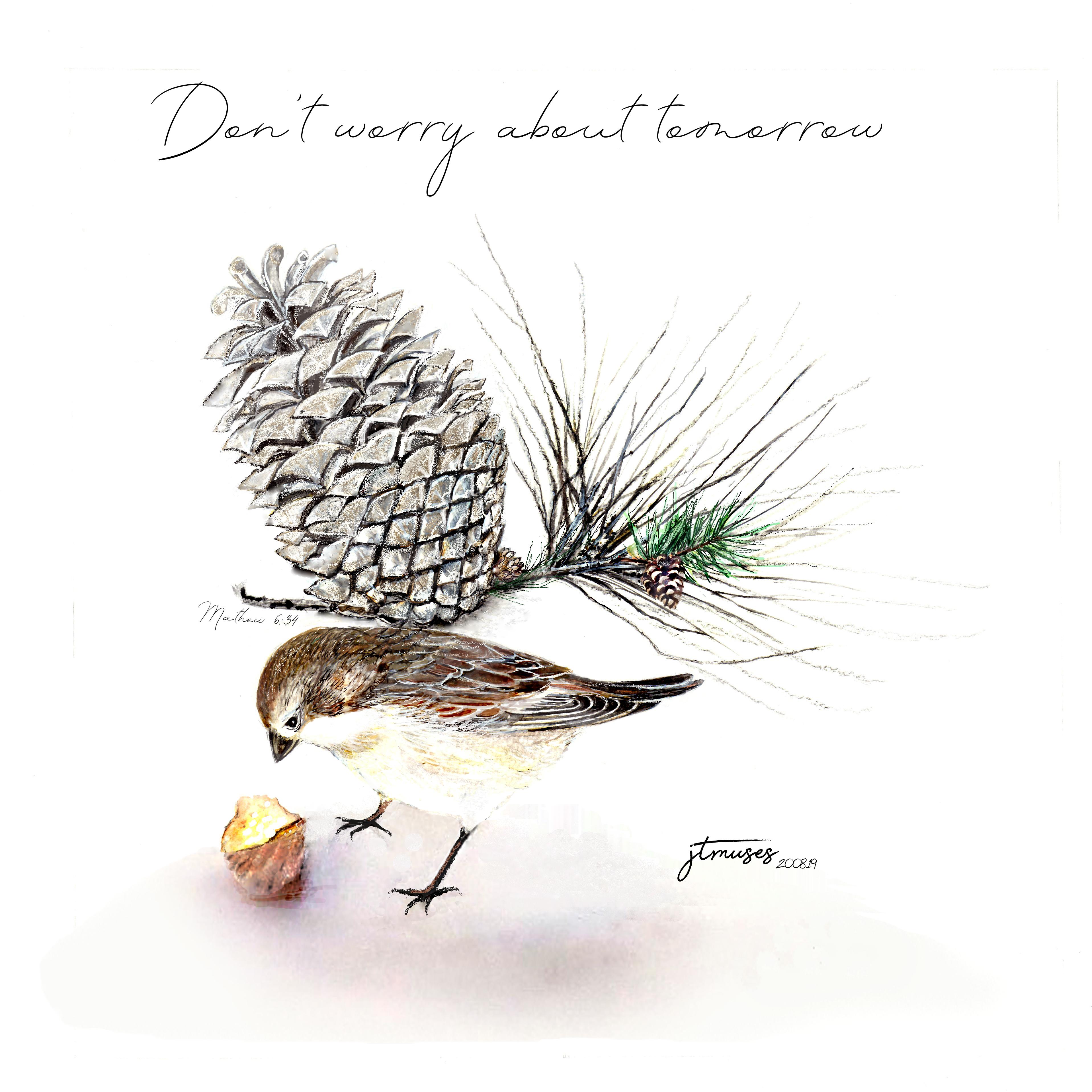 Eurasian Garden Sparrow