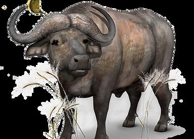 BigFive_buffalo_jtmuses.png