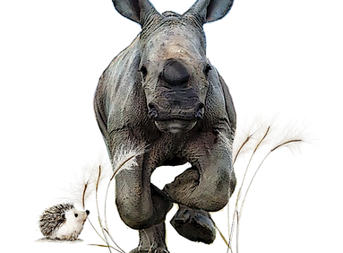 BigFive_rhinoceros_jtmuses