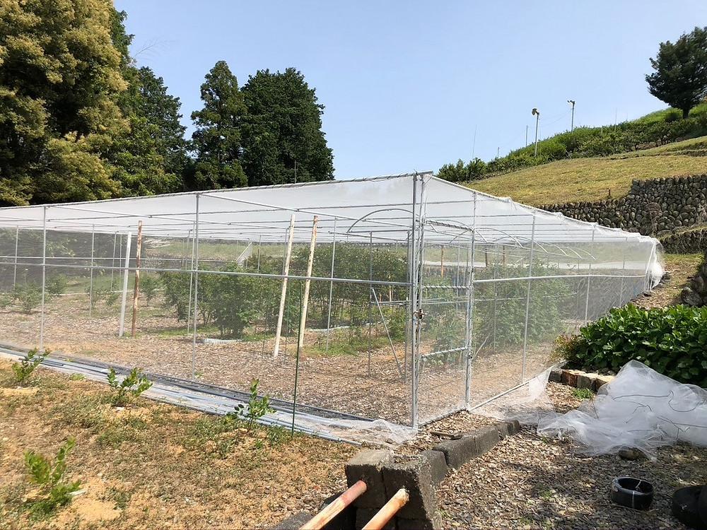 防鳥網の施工写真です。