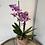 Thumbnail: Orchid Plant
