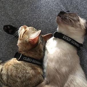 DooDog também para os gatinhos , ficarem