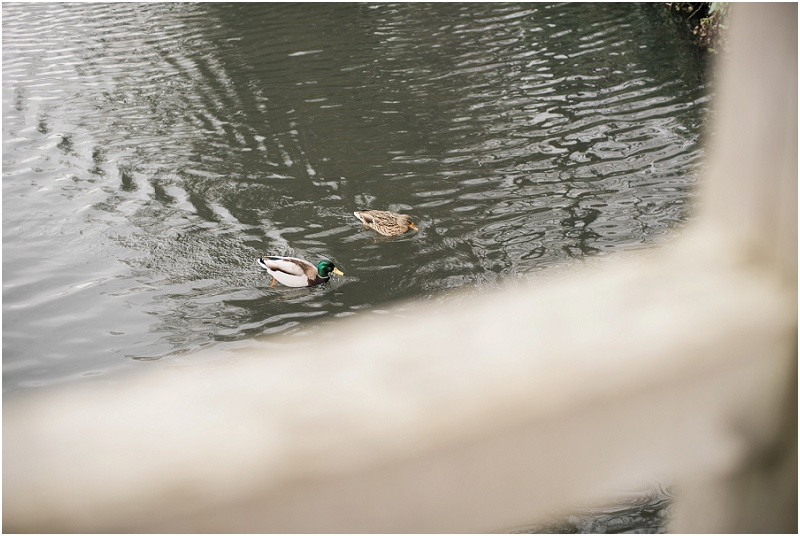 Ducks on the river at wedding at Malvern Registry Office
