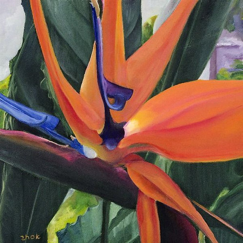 Bird of Paradise Flower Picture- Flames of Paradise 3