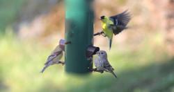 rosenberg, birds, wildlife