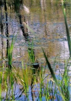 Stopyra, pond0001