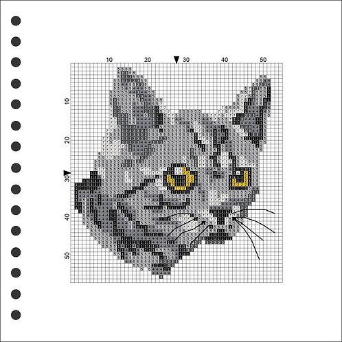 Photo Book - Cat