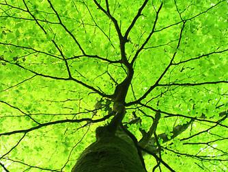 Keep a Green Tree