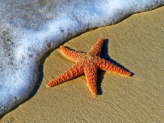 That Starfish Story