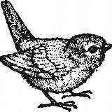 Finch.jpg