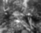 Screen Shot 2020-04-28 at 11.33.07 AM.pn