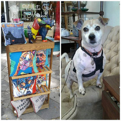 Zac loves our Pet Collection _#ilovedogs #ilovecats #petlover #pillows #homedecor