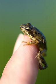 Tiny_frog.jpg