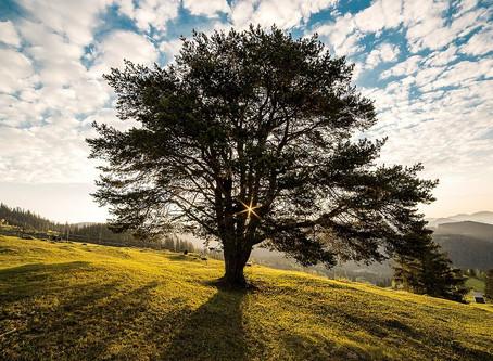 Méditation de l'arbre