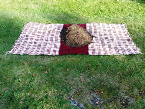 Anthill on picnic blanket - Ameisenhaufen auf Picknickdecke - Maurtue på piknikpledd