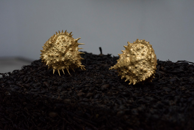 Golden Crabbs on Seaweedbase - Goldkrabben auf Seetangsockel - Goldkrabber på tangsokkel