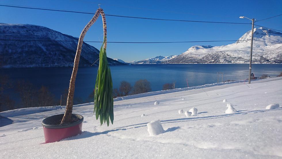 Jukka in the snow - Jukka im Schnee - Jukka i snø