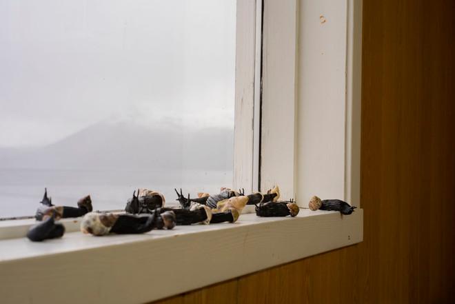 Ruth Unger - Snails