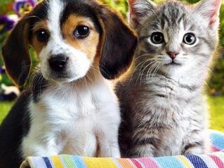 Município de Alvorada deverá ampliar programas e ações para o controle de cães e gatos abandonados