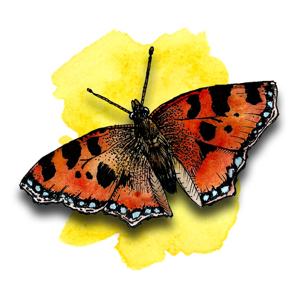 3. Butterfly