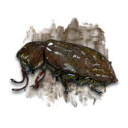 10. Death Watch Beetle