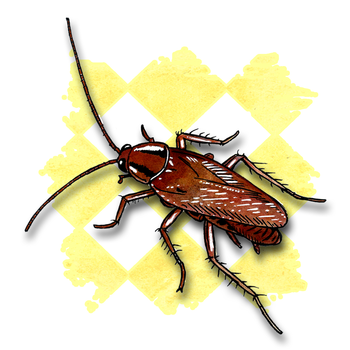 18. Cockroach