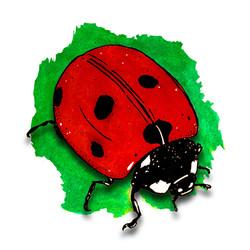 5. Ladybirds