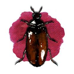 14. Museum Nuisance Beetle
