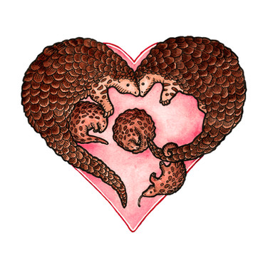 For the love of Pangolins