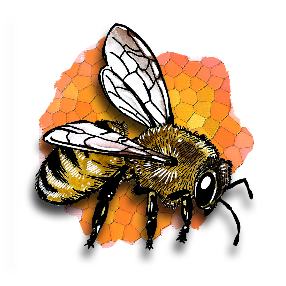 21. Bee