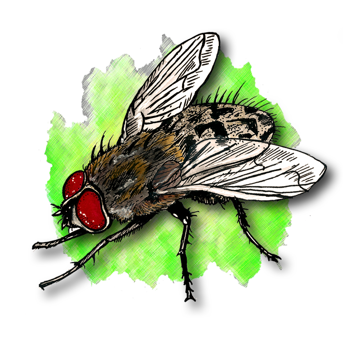 16. Cluster Fly
