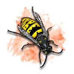 19. Wasp