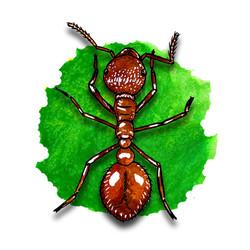 17. Ant