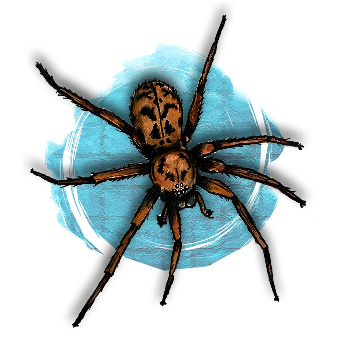 2. Spider
