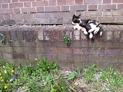 Morph the cat